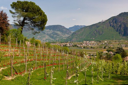 Holidays in Appiano - the sunny south of South Tyrol