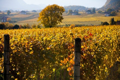 Vacanze d'autunno a Bolzano Vigneti e Dolomiti